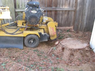 Professional tree removal and stump grinding by Anderson Tree Co, Sacramento, CA